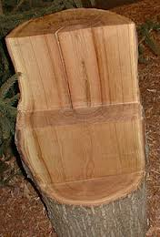 chestnut wood